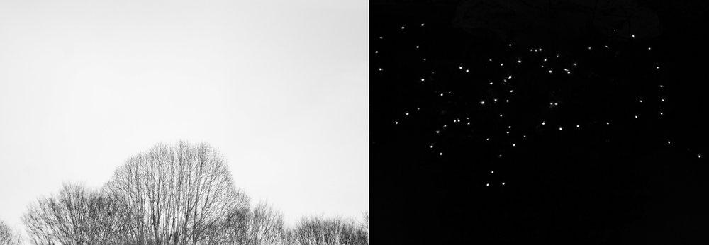 NEW_STARS.jpg