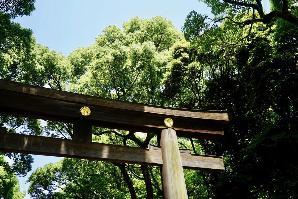 the famed  meiji shrine . a sanctuary in the city.