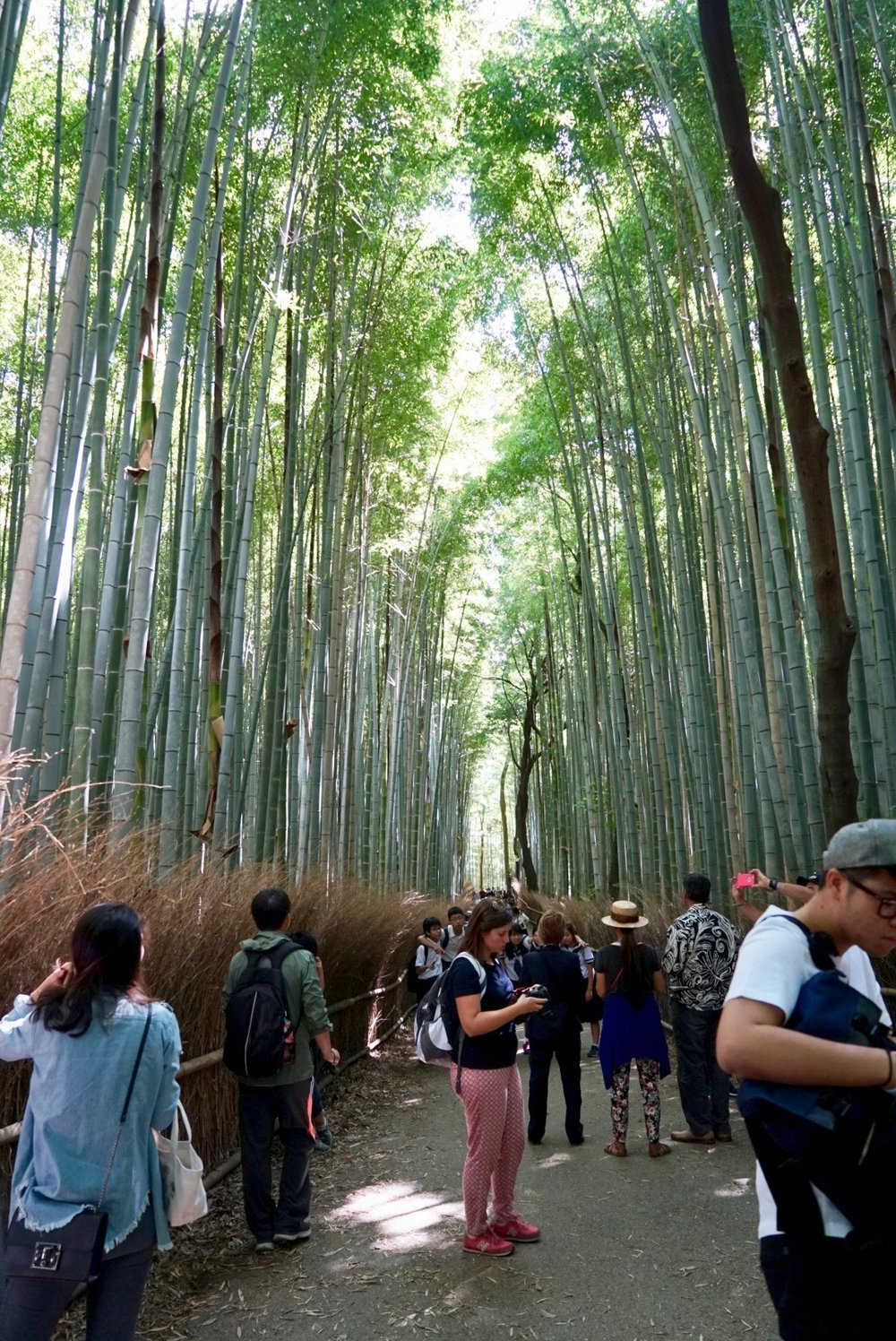 arashiyama bamboo grove  - gobeforethe crowds or not at all....