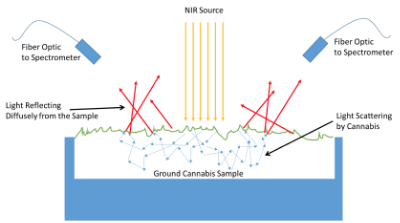 Figure 2: Orange arrows represent light launched by the spectrometer to probe the sample.  Blue arrows represent randomly scattered and absorbed light after it enters the sample, and red arrows represent the light that is emitted from the surface and can be collected and analyzed.