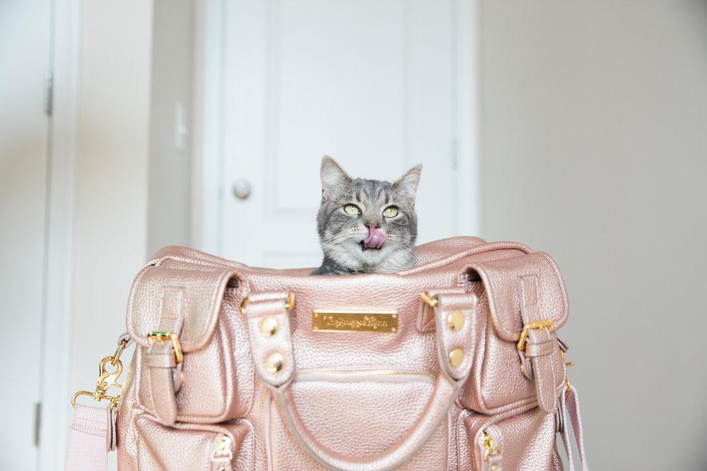 Cat in a Camera Bag