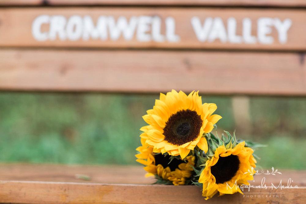 Sunflower Engagement Session at Cromwell Valley Park Baltimore Wedding Photographers Megapixels Media (16 of 31).jpg