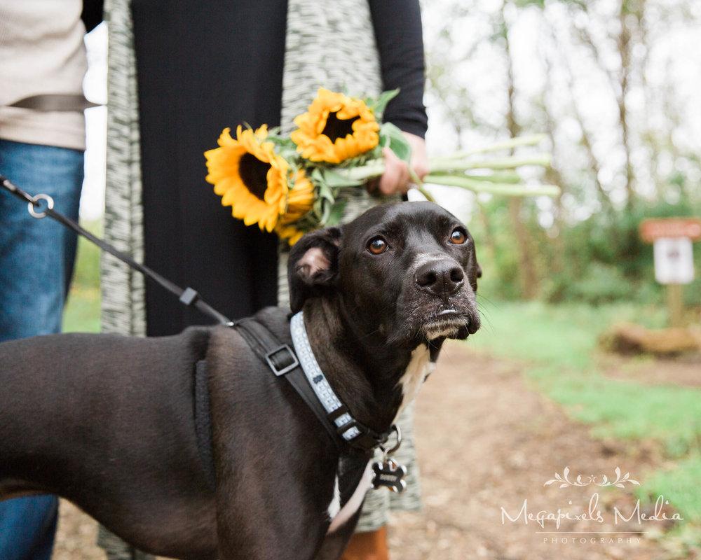 Sunflower Engagement Session at Cromwell Valley Park Baltimore Wedding Photographers Megapixels Media (31 of 31).jpg