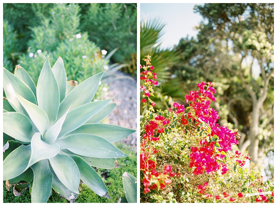 flowering bush and agave plant in Heisler Park in Laguna Beach