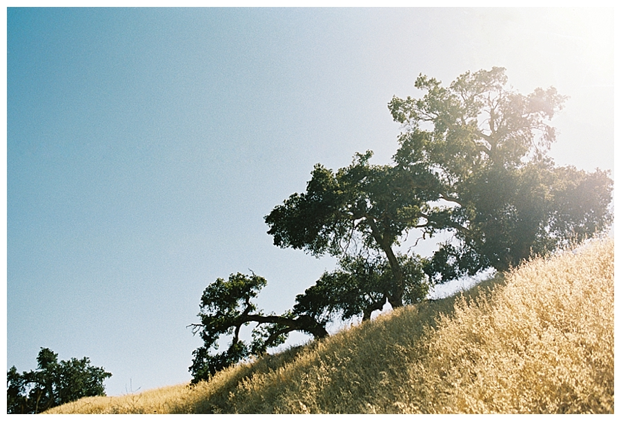 fine art travel film photography of Santa Ynez Valley