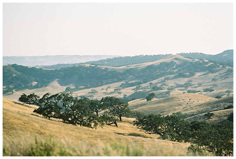 fine art travel film photography of Santa Ynez Wine Country