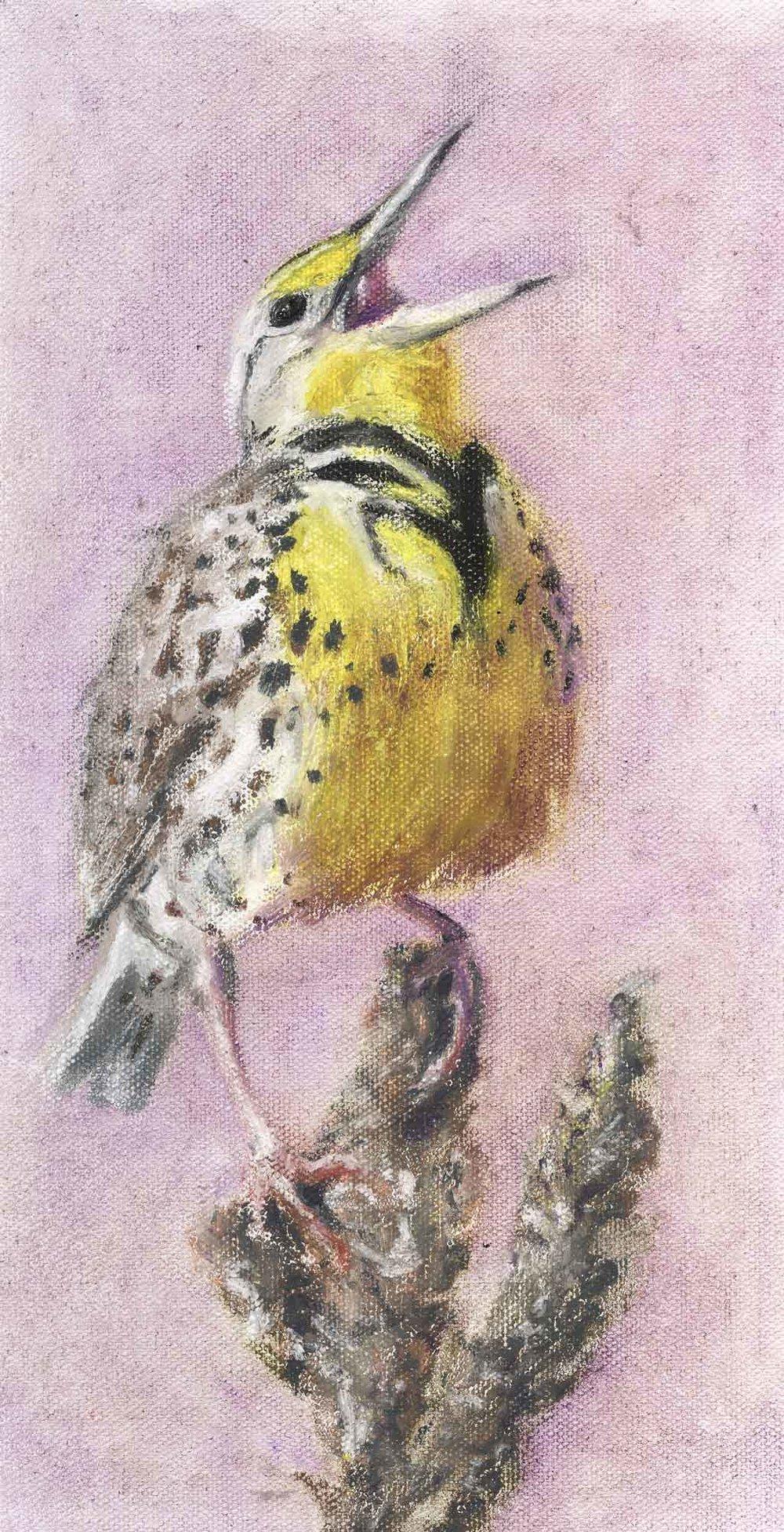 meadowlark--for-website--20170403.jpg