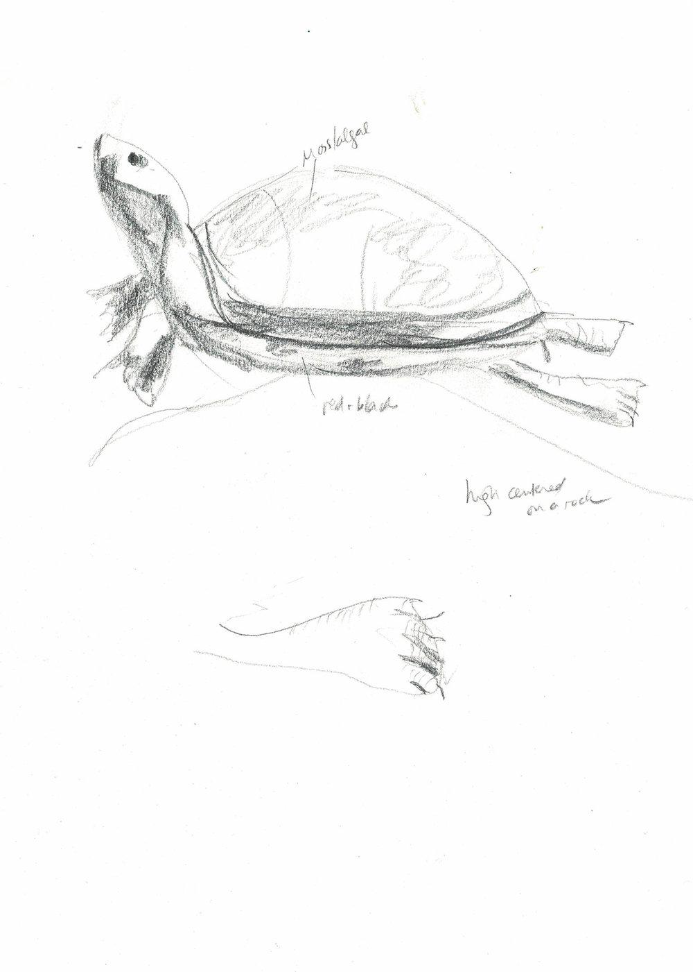 turtle_small.jpg