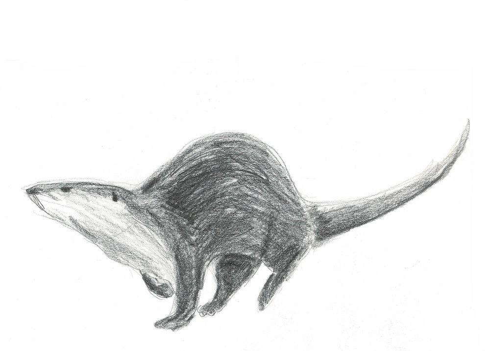 otter_small.jpg