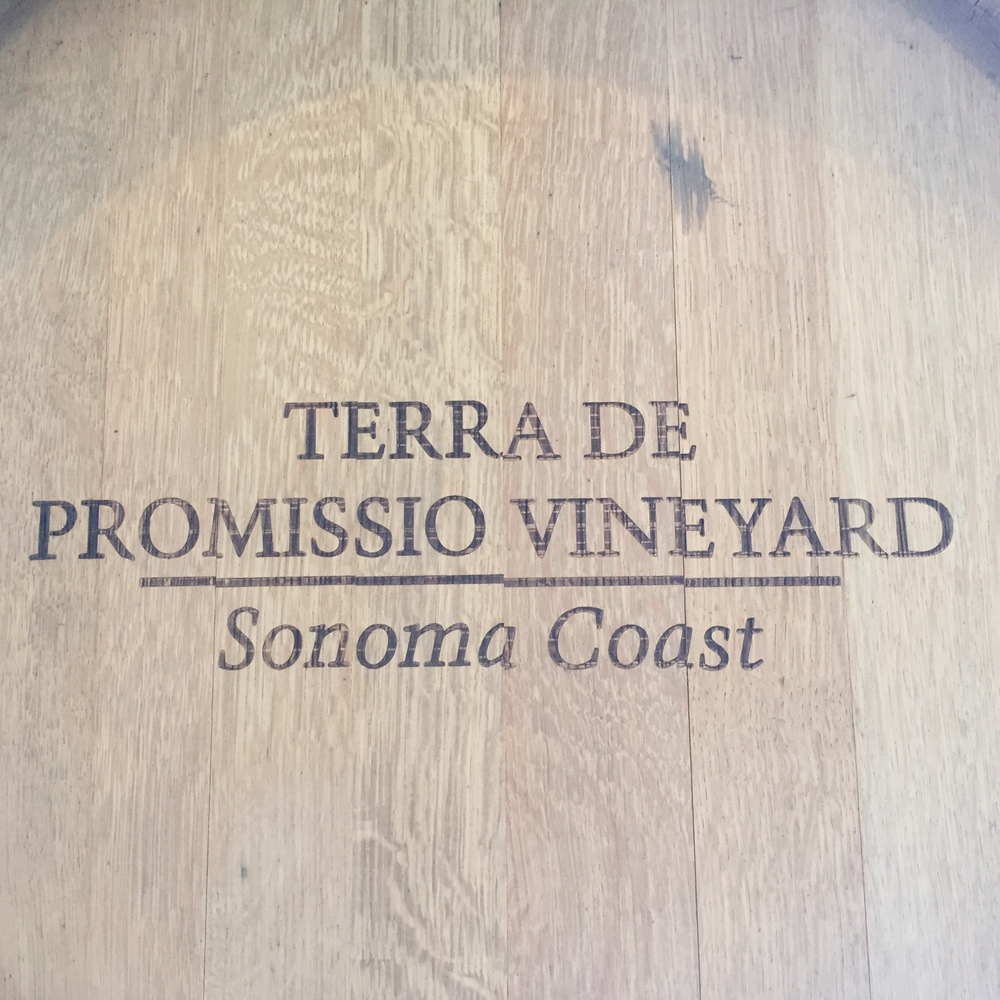 After draining from fermentation tanks, Land of Promise is aged in the best French oak barrels to create an age-worth wine.