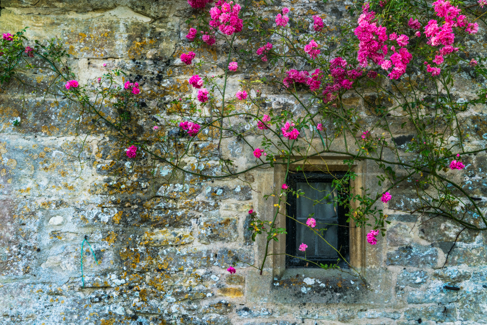 Arlington Row, Bibury, Cotswolds AONB, England, UK. Sony A7rII, Sony 24-70mm f/4 at 38mm, ISO 400, f/8, 1/125th. Edited in Lightroom and Photoshop.