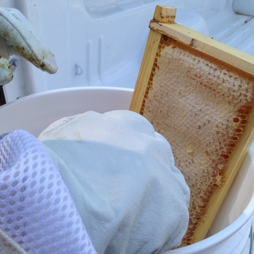 Scraping the honeycomb into the bucket