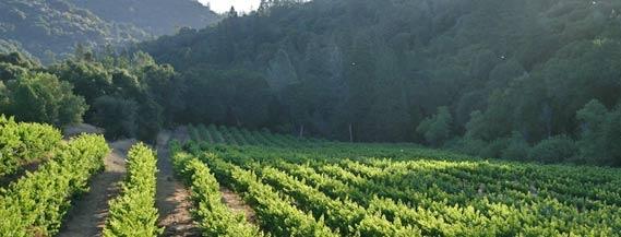 Butterfly Creek Winery -