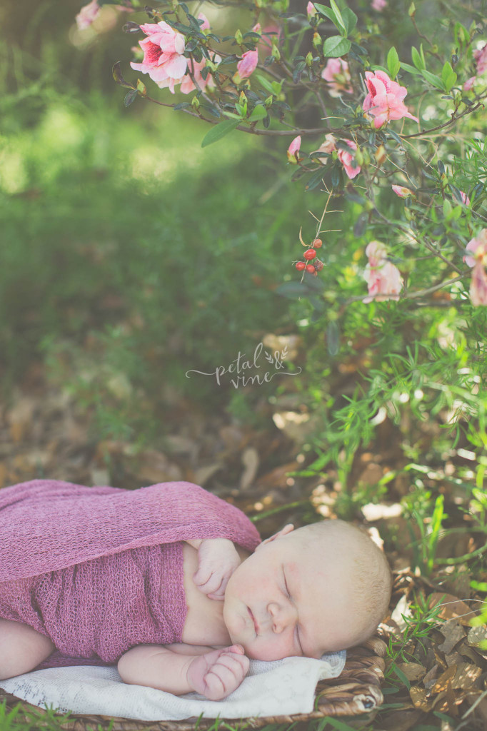 Lakeland Baby Photography: Sweet Newborn Kate!