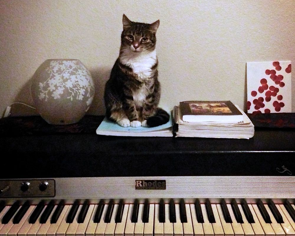 Yuki Cat on Rhodes Keyboard