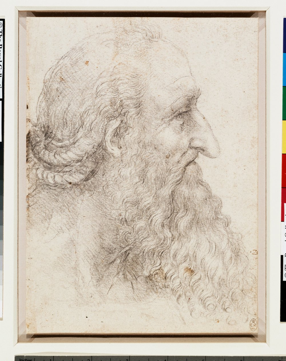 The head of an old bearded man, c.1517-18.jpg