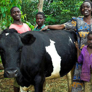 UGANDA LIVESTOCK MICROBUSINESS - COW  Suggested Gift: $400  This gift gives an  impoverished family in Uganda  an ongoing source of nutrition and supplemental income.