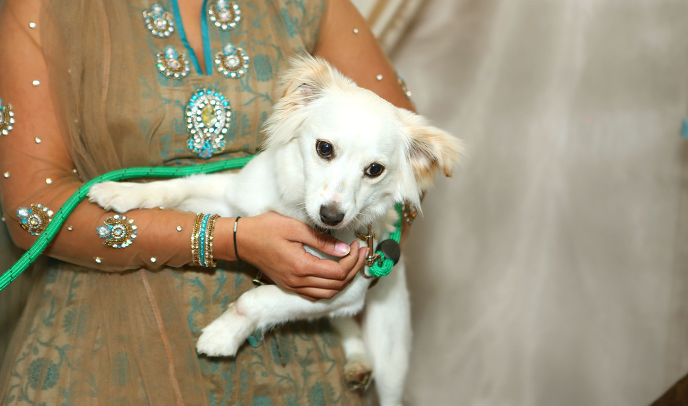 Amesha's Mehndi Night By Jennifer Lam Photography (27).JPG