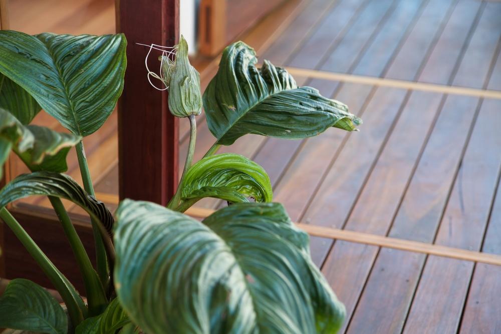 deck-plant.jpg