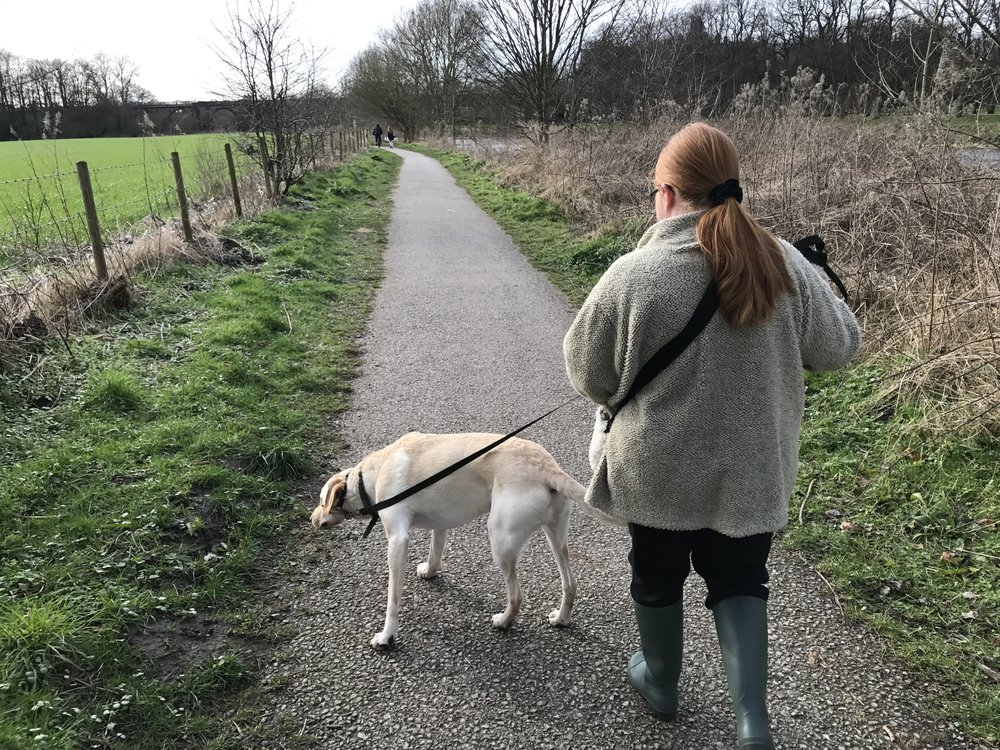 Roy has been out with Claire for an hour and a half as part of our supported dog walking scheme.