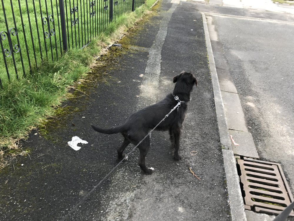 Milly has been for a walk around Bamber Bridge.