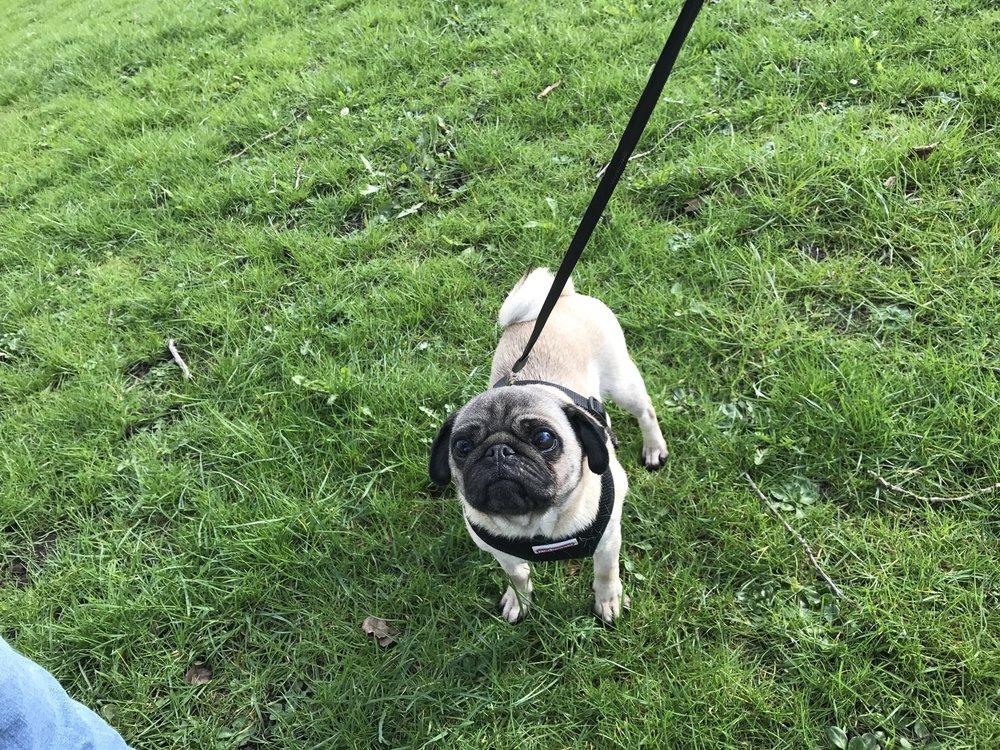Georgie has been for a walk around Bamber Bridge.