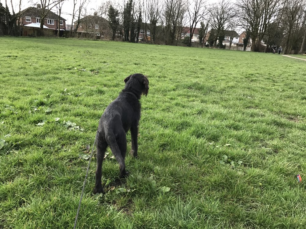 Milly has been out around the park in Bamber Bridge.