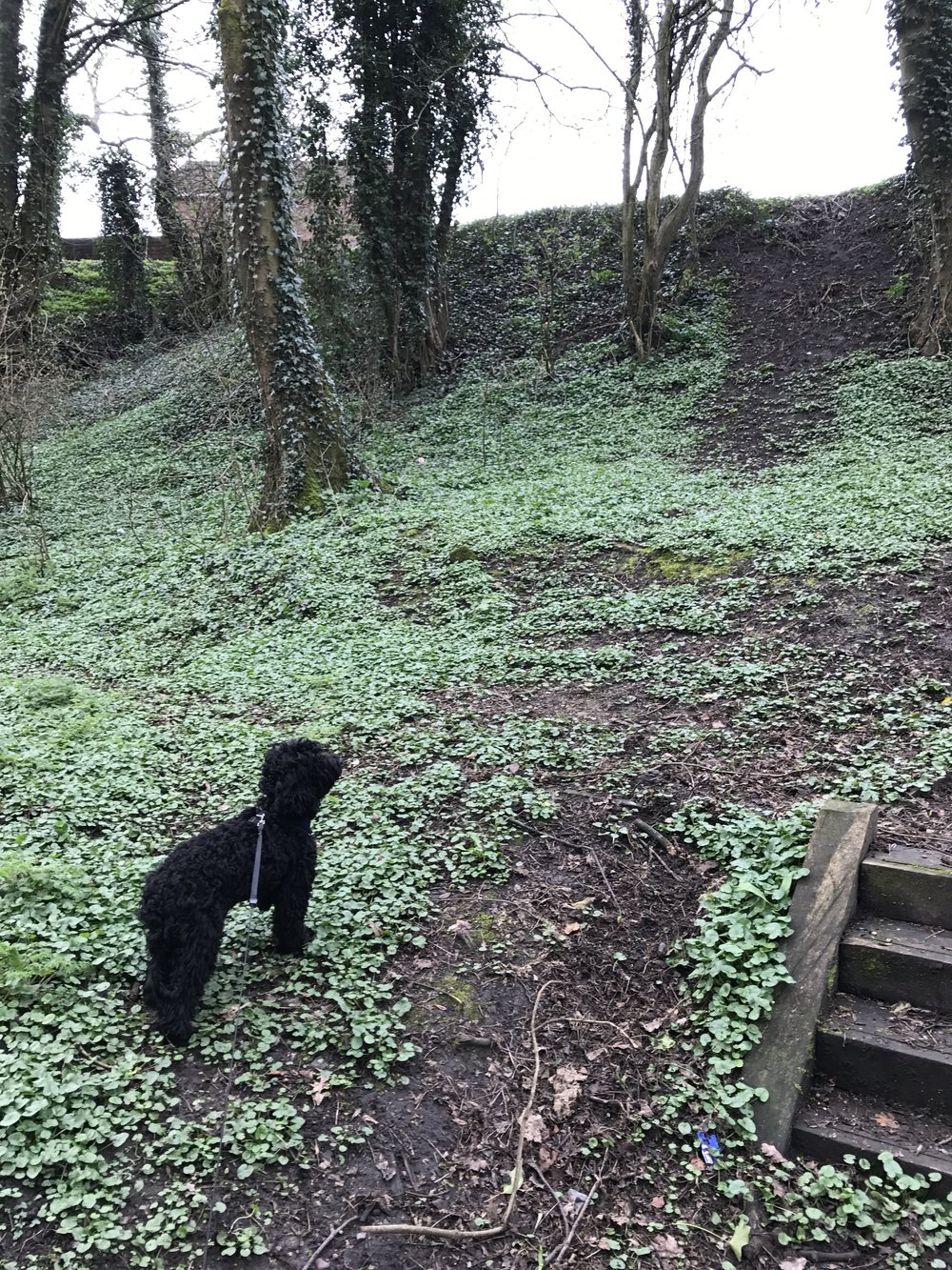 Ruby has been for a walk around Walton-le-Dale.