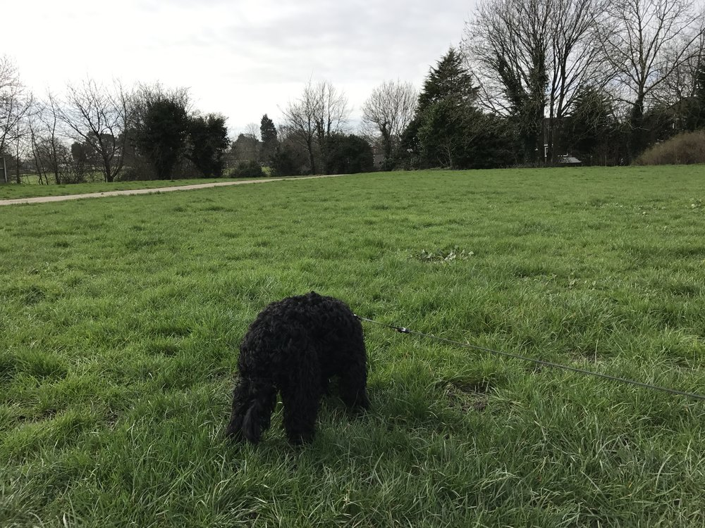 Ruby has been out around Bamber Bridge/Walton-le-Dale today.