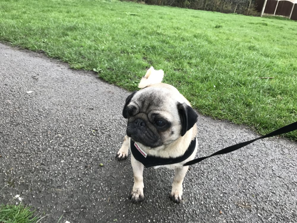 Georgie has been out for a short walk at the nearby park in Bamber Bridge today.