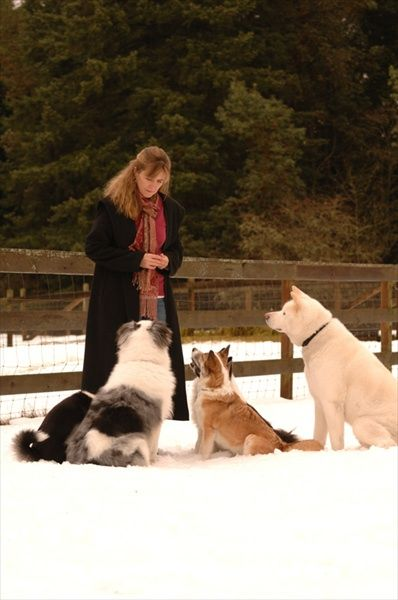 Scotti and Dogs, Christmas 2008.jpg