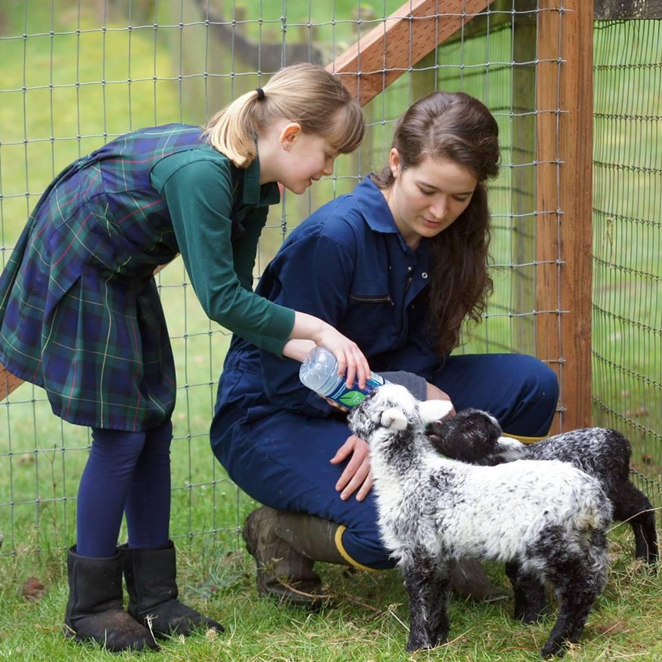 Carden lamb.jpg