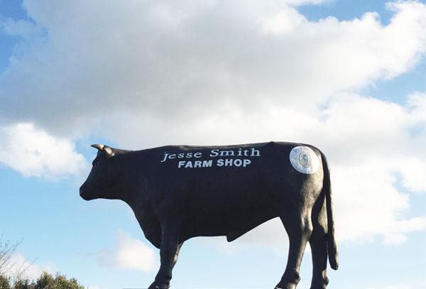 cow-lovelane.jpg