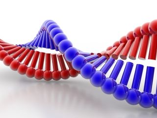 10 Principles Of Organizational Learning Dna Learning To Be Great