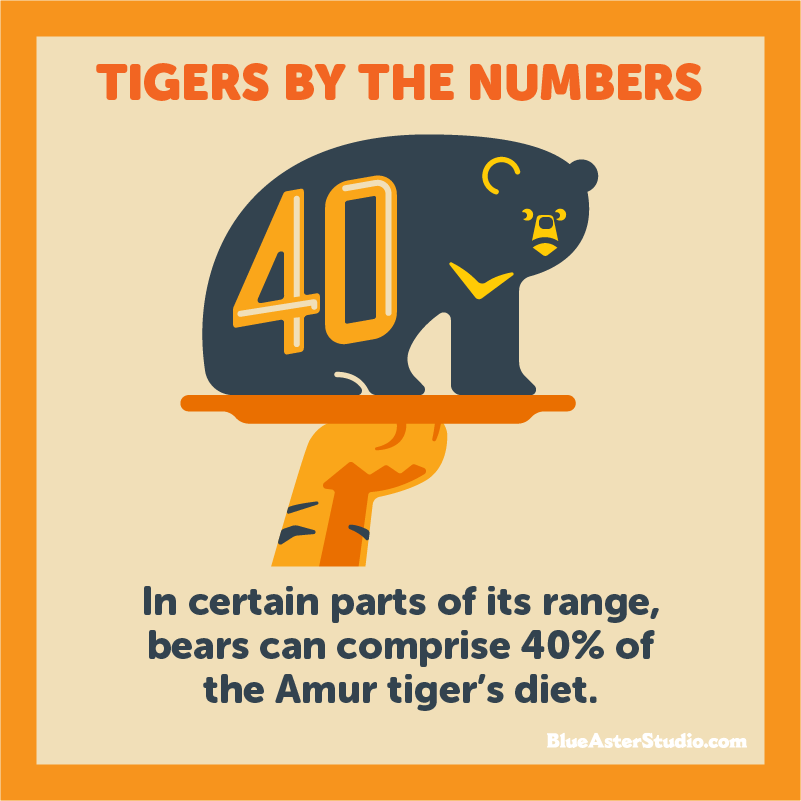 tiger-diet-infographic.jpg