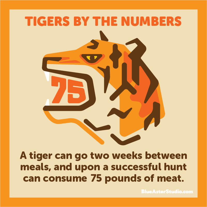tiger-meal-infographic.jpg