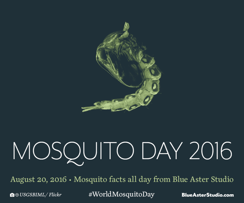 Graphic-Design-Mosquito-Day-2016