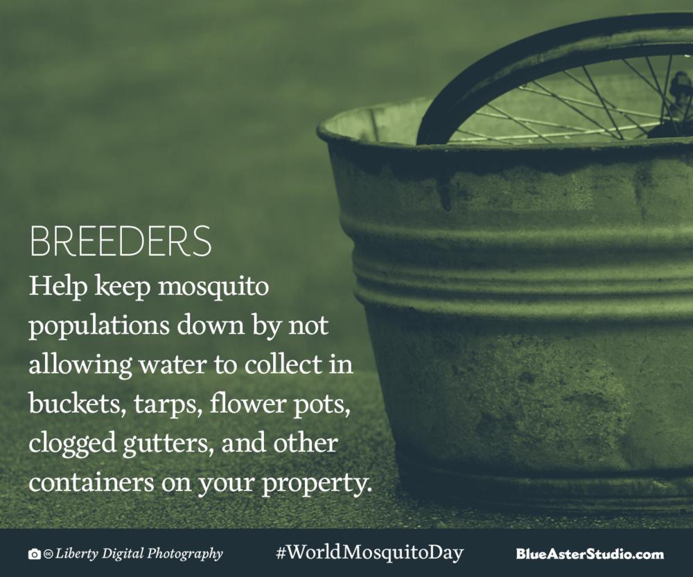 Mosquito-Breeder-Design