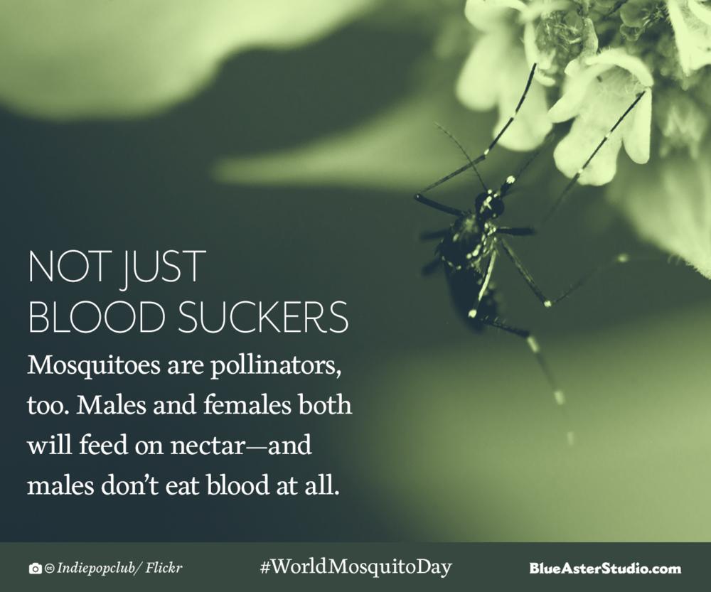 Mosquito-Pollinators-Design