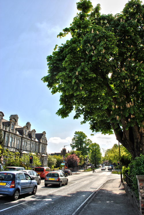 leafy-clifton-short-walk-york