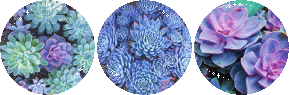 plant_circle_divider_by_cal_vain-da6vnc4.png
