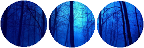 divider__dark_night_in_the_forest__by_catspy69-db9pfj5.png