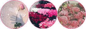 roses_divider_by_starrywave-dahayqo.png