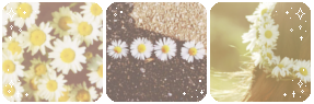 pushing_daisies___deco_divider_by_thecandycoating-dagekvy.png