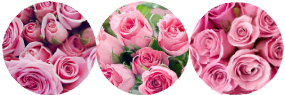 pink_flower_circle_divider_by_bluewolf895-dc2wfsj.png