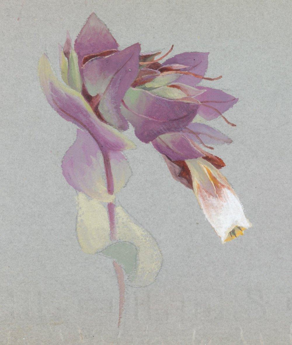 Algerian Flowers,  Lilias Trotter
