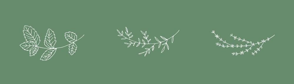 ClarityKombucha-Branding3.png