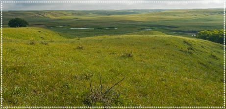 Sandhills of Nebraska where the journey begins for hundreds of our Natural Calves