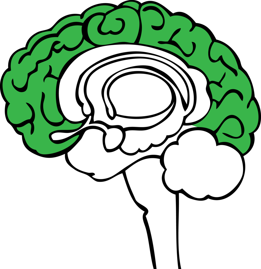 Neocortex: The Science Behind It All