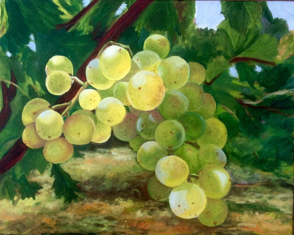 """Harvest-Ready Grapes"""
